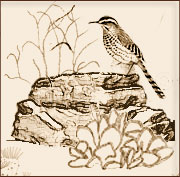Little Bird Image